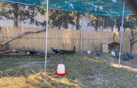 Des anumeaux à la ferme de Resort Medical Sousse
